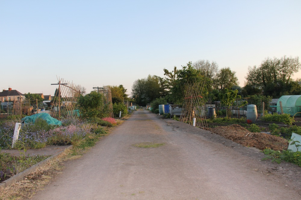 St Julians Allotment wide picture